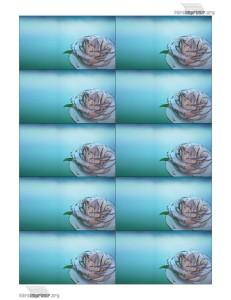 Tarjetas-de-presentacion-con-rosa-de-cristal-para-imprimir
