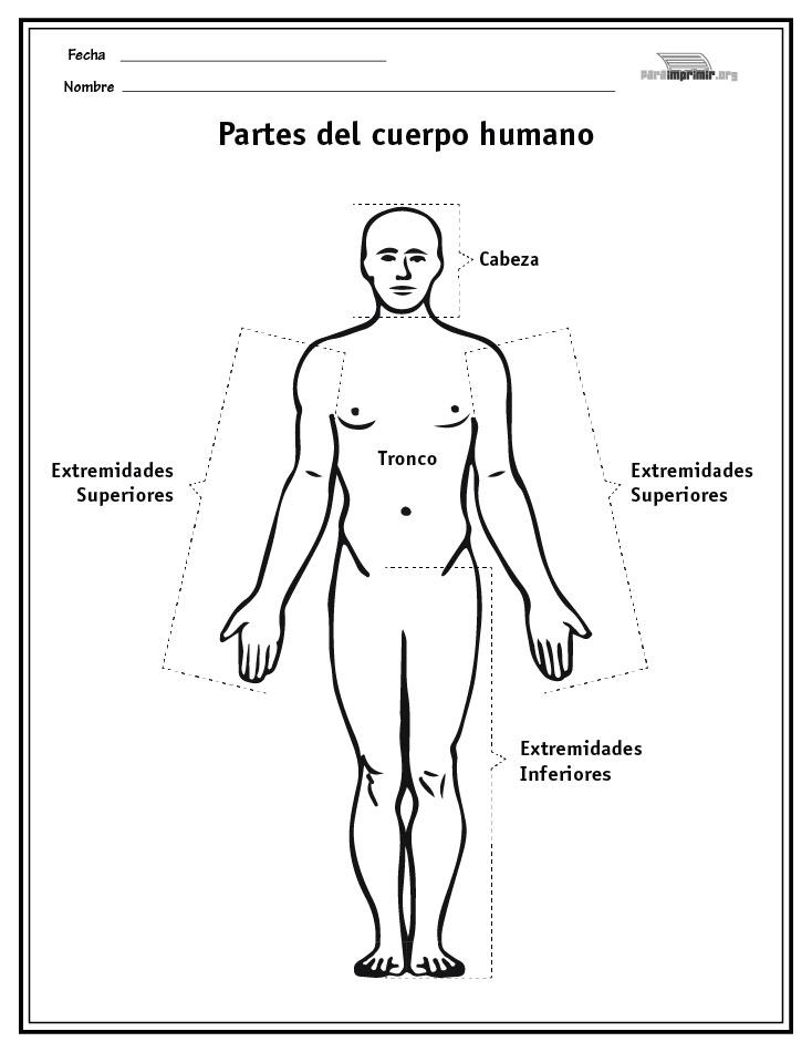 Hermosa Imprimible Esquema Del Cuerpo Humano Motivo - Anatomía de ...