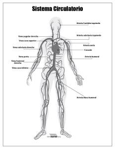 Sistema Circulatorio con nombres para imprimir